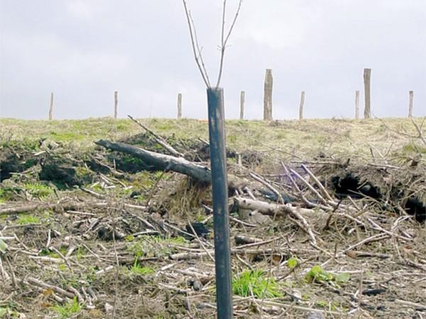 "Plant Saver® Netzmanschette ""Net Protect®"""