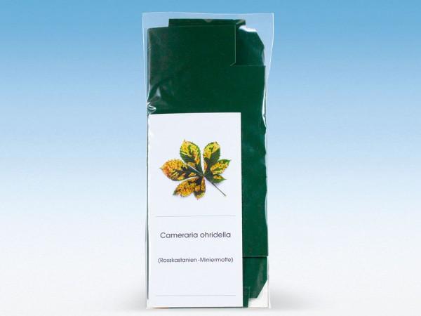 Pheromon zur Anlockung von Schmetterlingen