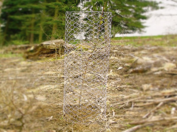 PLANT SAVER® Baumschützer aus Sechseckgeflecht, 25 (Maschenweite mm)
