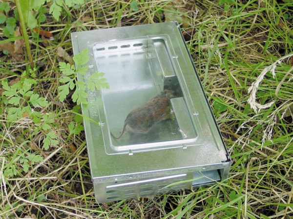 Lebendfangfalle Victor für Mäuse